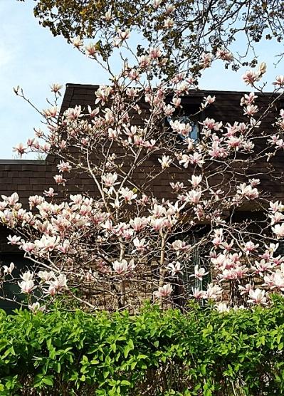 pretty flower tree